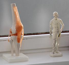 Kniegelenk